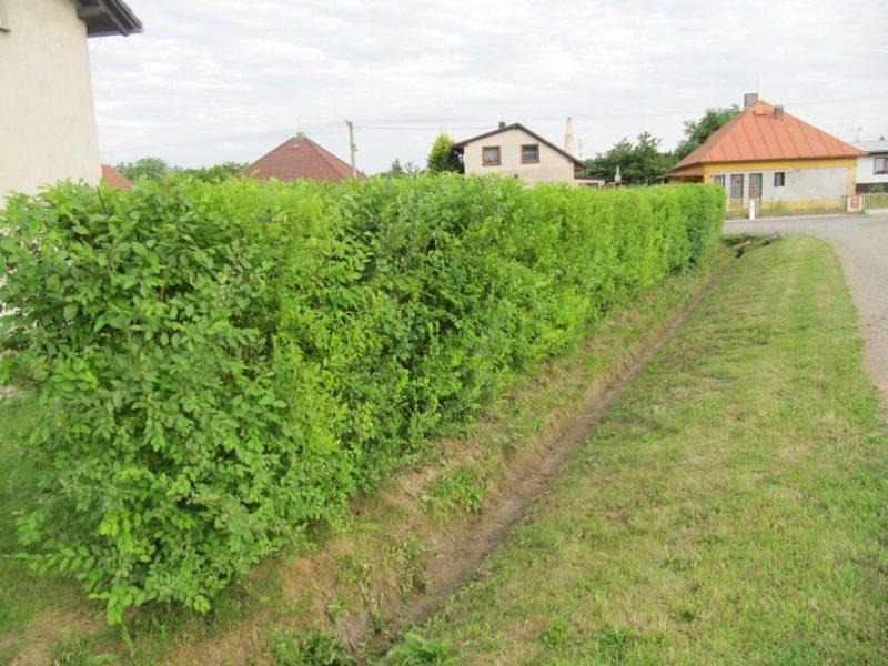 Kouzelný živý plot